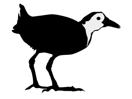 Illustration in style of black silhouette of water hen Vector