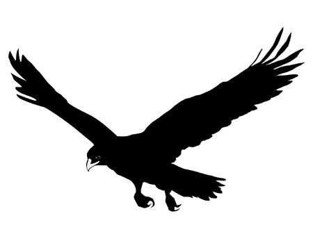 silhouette aquila: Illustrazione in stile silhouette nera di aquila reale