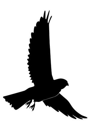 Illustration dans le style de la silhouette noire de faucon crécerelle