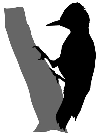 woodpecker: Illustration in style of black silhouette of woodpecker