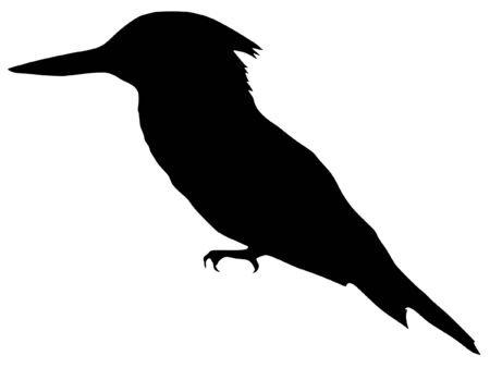 kingfisher: Illustration in style of black silhouette of kingfisher Illustration
