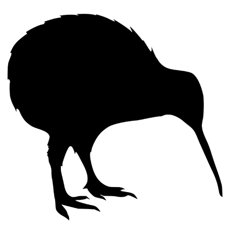 black bird: Illustration in style of black silhouette of kiwi