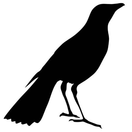 thrush: Illustration in style of black silhouette of thrush Illustration