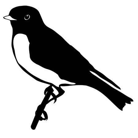 bluebird: Illustration in style of black silhouette of bluebird Illustration