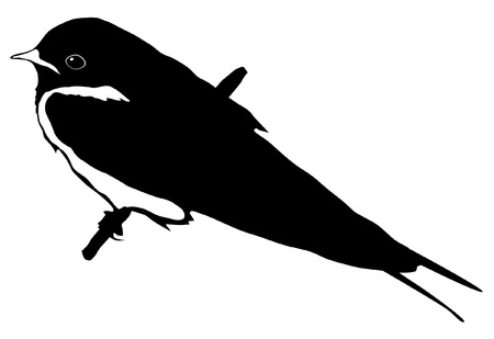 young bird: Illustration in style of black silhouette of swallow