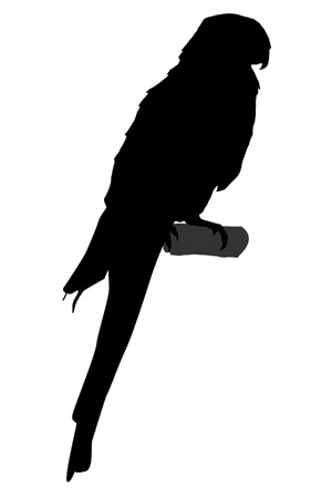 parrot tail: Illustration in style of black silhouette of parrot