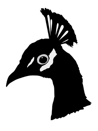 Illustration in style of black silhouette of peacock Vector