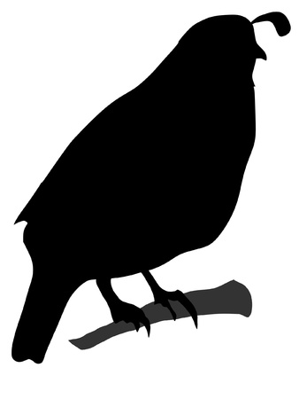 Illustration in style of black silhouette of quail Vector