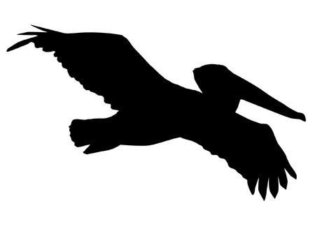 Pelican: Illustration in style of black silhouette of pelican