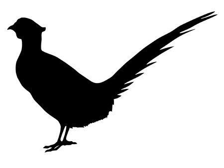 Illustration in style of black silhouette of pheasant Illustration