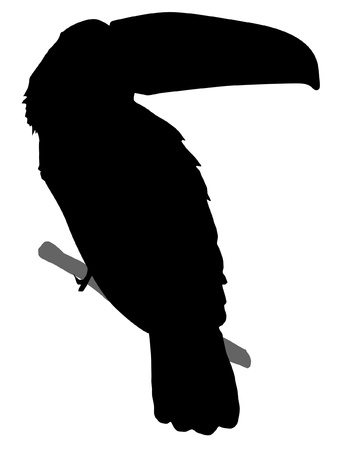 Illustration in style of black silhouette of toucan Vector