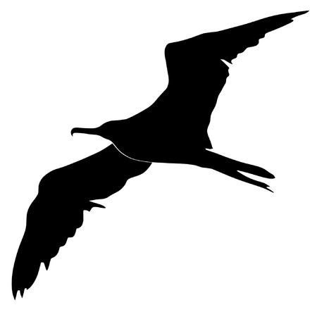 Illustration in style of black silhouette of fregat bird Vector