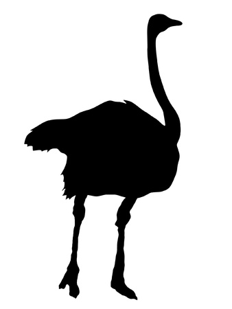 Illustration in style of black silhouette of ostrich Vector