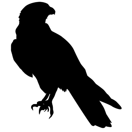 Illustration in style of black silhouette of falcon Vector