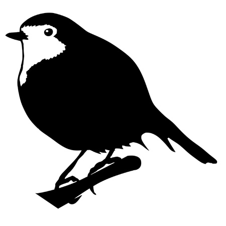 robin bird: Illustration in style of black silhouette of robin