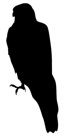 goshawk: Illustration in style of black silhouette of goshawk Illustration