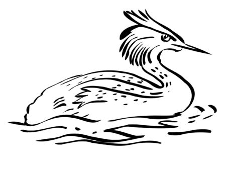 grebe: Illustration in style of black silhouette of grebe