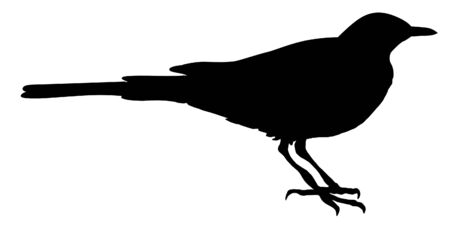 white wagtail: Illustration in style of black silhouette of wagtail