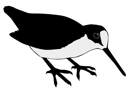 Illustration in style of black silhouette of woodcock