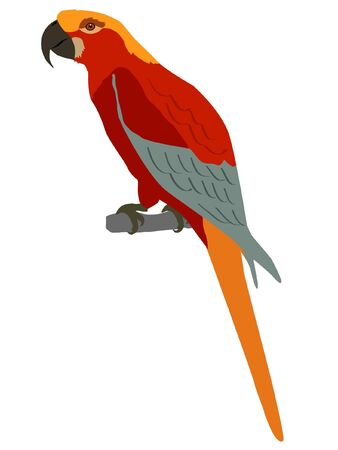macaw: Illustration in style of black silhouette of macaw