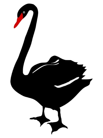 swans: Illustration in style of colored silhouette of black swan