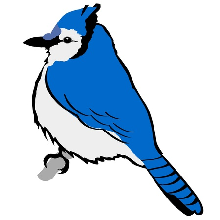 Illustration in style of colored silhouette of blue jay Illustration
