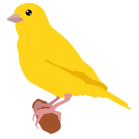 tail: Illustration in style of colored silhouette of canary Illustration