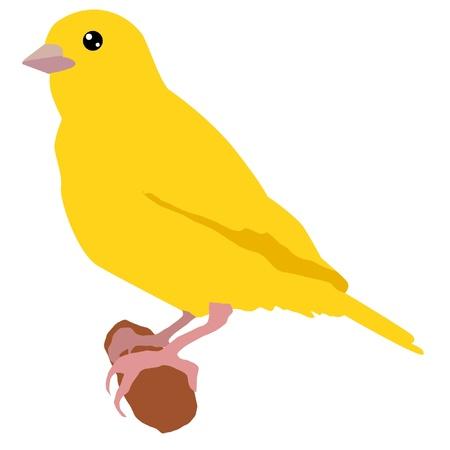 pajaro dibujo: Ilustración de estilo de la silueta de color de los canarios Vectores