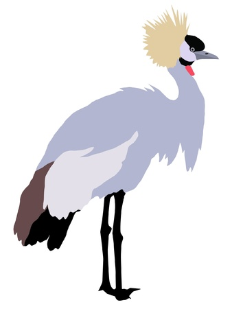 Illustration in style of colored silhouette of crowned crane Vector