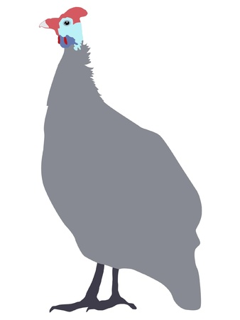 fowls: Illustration in style of colored silhouette of guinea fowl Illustration