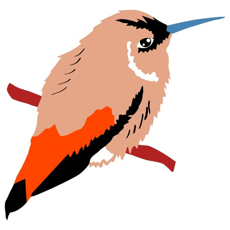 Illustration in style of colored silhouette of hummingbird Vector