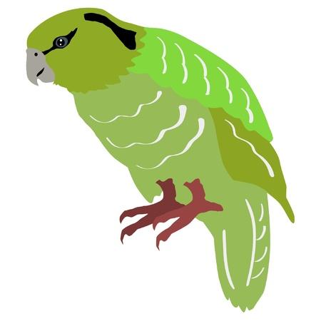 Ilustración de estilo de la silueta de color de los kakapo