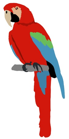 parrot tail: Illustration in style of colored silhouette of macaw