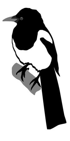 urraca: Ilustraci�n de estilo de la silueta coloreada de urraca