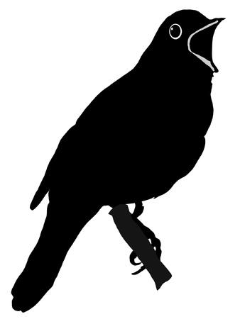 Illustration im Stil der schwarzen Silhouette der Nachtigall