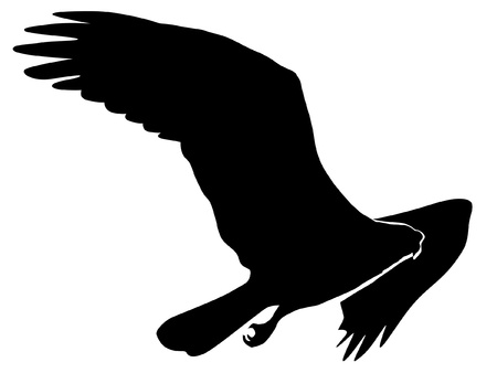 osprey: Illustration in style of colored silhouette of osprey Illustration