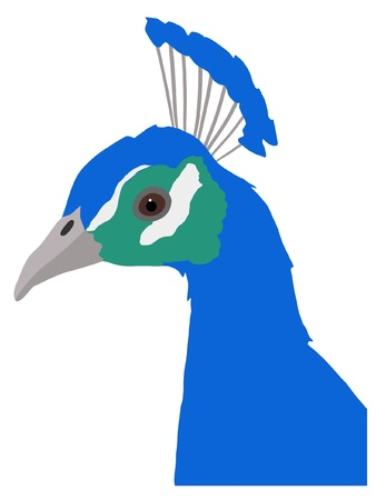 Illustration in style of colored silhouette of peacock Vector