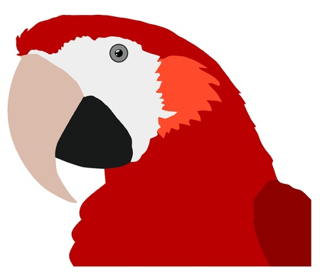 Illustration in style of colored silhouette of macaw Stock Vector - 11611455