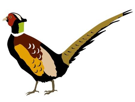 Illustration dans le style de la silhouette colorée de faisan Vecteurs