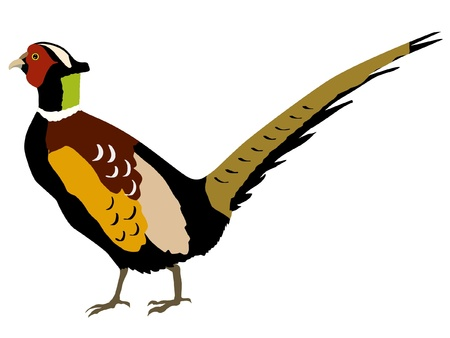 Illustration in style of colored silhouette of pheasant Ilustração