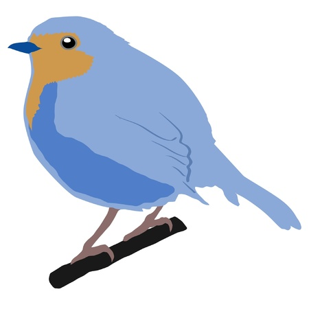 robin bird: Illustration in style of colored silhouette of robin