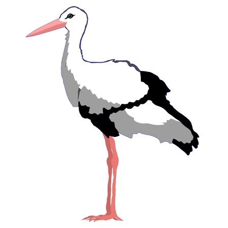 Illustrazione in stile silhouette colorate di cicogna