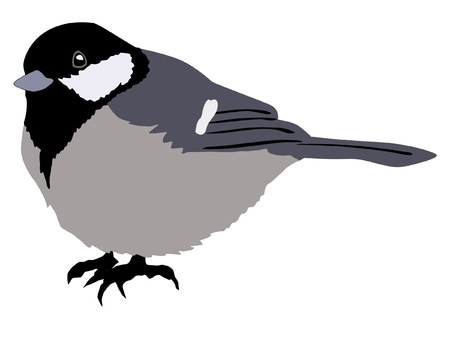 tit: Illustration in style of colored silhouette of tit Illustration