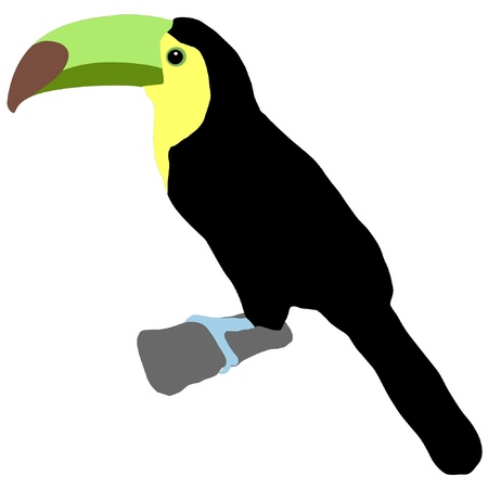 Illustration in style of colored silhouette of toucan