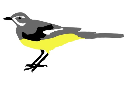 wagtail: Illustration in style of colored silhouette of wagtail Illustration