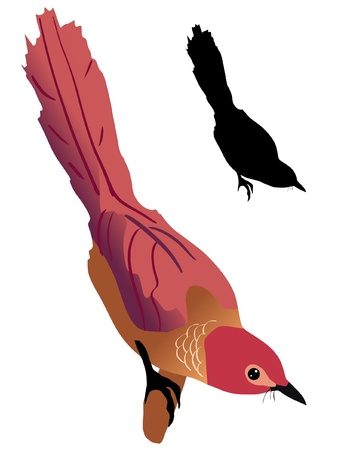 Illustration in style of colored silhouette of warbler Stock Vector - 11611376