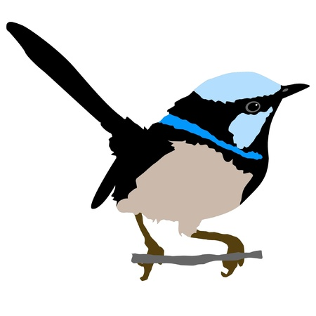 Illustration in style of colored silhouette of wren