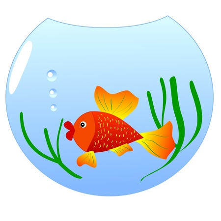 One coloured illustration of an aquarium fish Vector
