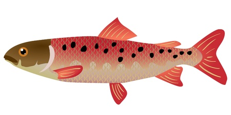 One coloured illustration of the beautiful fish Stock Vector - 11611501