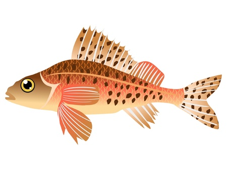 One coloured illustration of the beautiful fish Stock Vector - 11611502